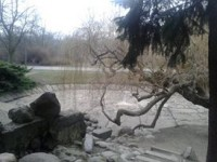 Wierzba przy wodospadzie
